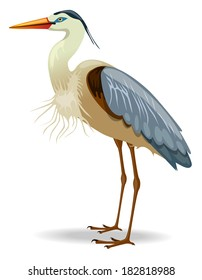 Great blue heron- Vector illustration