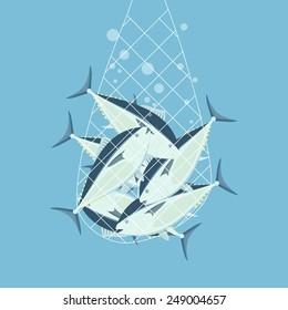 Great bluefin tuna caught in fishing net.