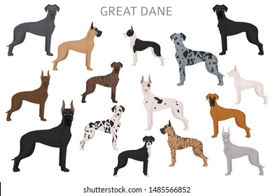 Great dane. Different variaties of coat color dog set.  Vector illustration
