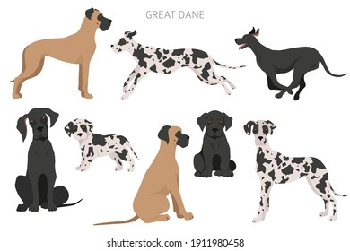 Great dane dogs in different poses. Adult and great dane puppy set.  Vector illustration