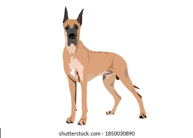 Great Dane on a white background