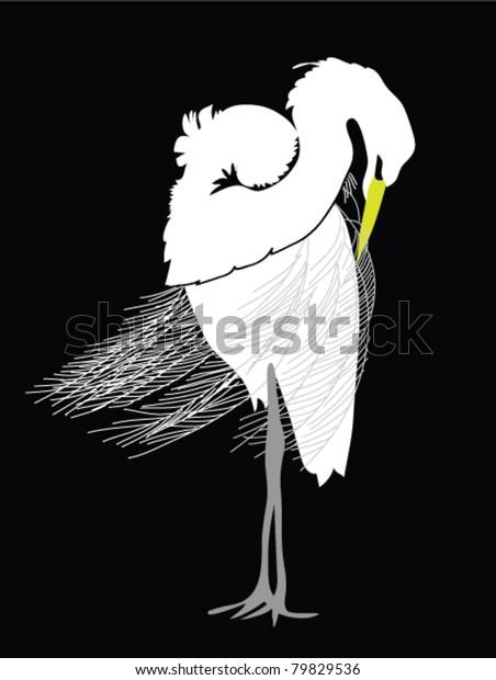 Great Egret grooming, black and white illustration.  Latin name - Ardea alba.