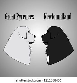 Great Pyrenees and Newfoundland Dog Vector