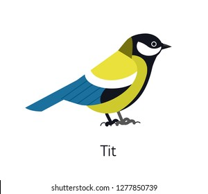 Great tit isolated on white background. Cute funny small insectivorous bird. Gorgeous wild avian species. Adorable little birdie. Modern vector illustration in trendy flat geometric style.