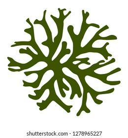 green algae seaweed