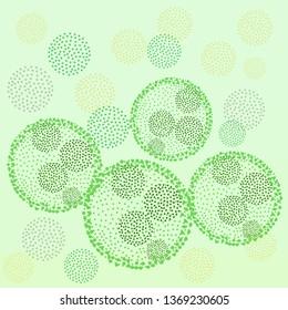 Green algae volvox colony