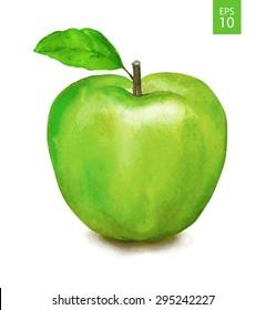 Green apple. Watercolor drawing. Vector illustration