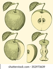 Green apples. Design set. Hand drawn engraving. Vector vintage illustration. 8 EPS