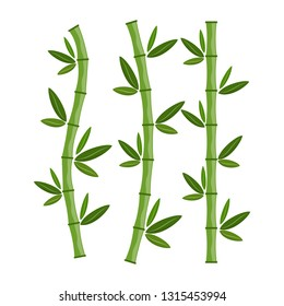 Green bamboo branches and leaves. Vector illustration. Bamboo stems. Bamboo icon.