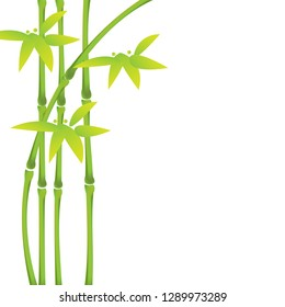 Green bamboo stalks and leaves on a white background with copy space. Vector illustration. eps10