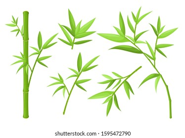 Green bamboo stems and leaves colorful vector illustrations set. Asian exotic tropical plants isolated on white background. China rainforest oriental flora. Jungle trees collection.