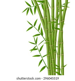 Green bamboo stems with leaves isolated on white background
