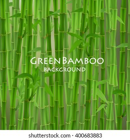 Green bamboo vector illustration.