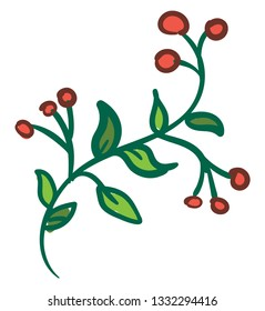 A green bittersweet plant with seven leaves and nine berries, vector, color drawing or illustration.
