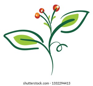 A green bittersweet plant with two leaves and three berries, vector, color drawing or illustration.