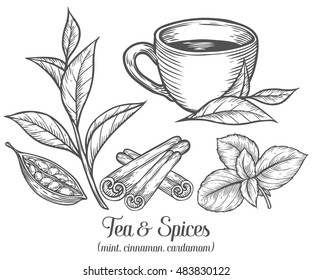 Tea plant images stock photos vectors shutterstock green black herbal tea plant leaf with spices cardamom cinnamon mint hand thecheapjerseys Image collections