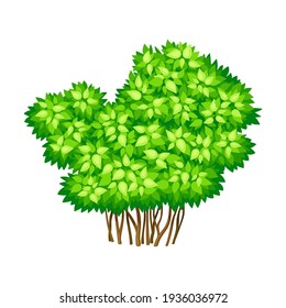 Green Bush or Underwood with Branched Stem as Perennial Woody Plant Vector Illustration