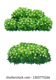 Green bush with white flowers of different shapes. Ornamental plant shrub for decorate of a park, a garden or a green fence. Thick thickets of shrubs. Foliage for spring and summer card design.