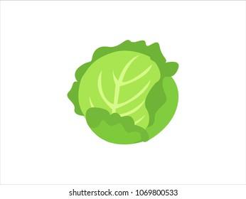Green cabbage vegetable isolated. cabbage for farm market, vegetarian salad recipe design. Vector illustration