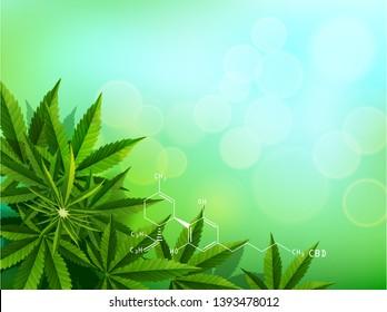 Green cannabis leaf drug marijuana herb Background. Vector natural Marijuana CBD Cannabis Green Leaf.