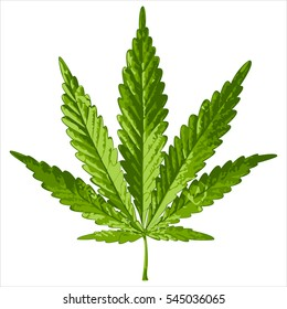 green cannabis leaf on white background vector