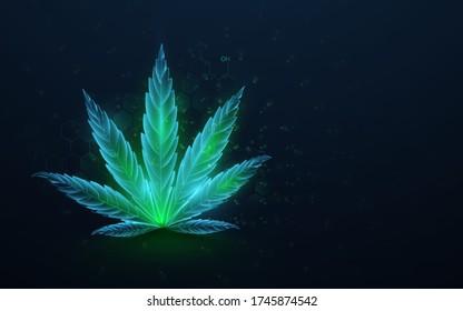 Green cannabis leaves with formula CBD. Growing medical marijuana