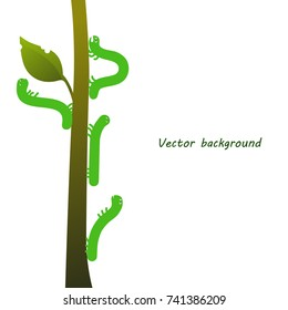 Green caterpillars creep up. Funny caterpillars on a branch, vector illustration