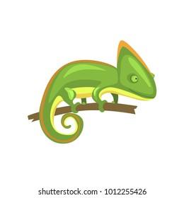 Green chameleon, amphibian animal cartoon vector Illustration