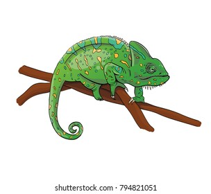 Green chameleon in yellow spots sitting on the branch. Character