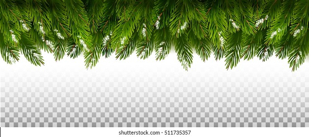 Green Christmas tree branches on a transparent background. Vector.