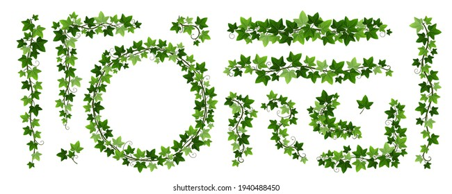 Green climbing ivy creeper branches isolated on white background. Hedera vine frames and borders, botanical design element. Vector illustration of hanging or wall creeping ivy plants
