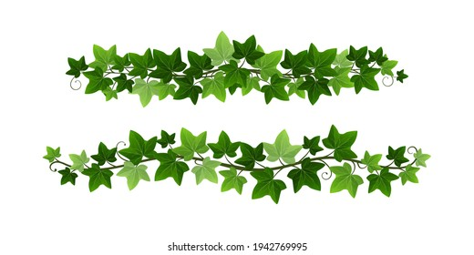 Green climbing ivy creeper branches isolated on white background. Hedera vine botanical border or frame design element. Vector illustration of hanging or wall climbing ivy plant