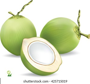 Green coconut isolated on white background.vector