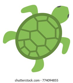 Turtle Top View Images Stock Photos Vectors Shutterstock