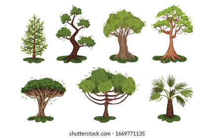 Green Deciduous Trees with Exuberant Tree Crown Vector Set