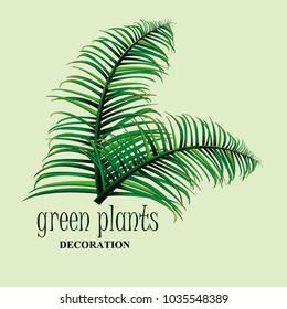 green decoration plants