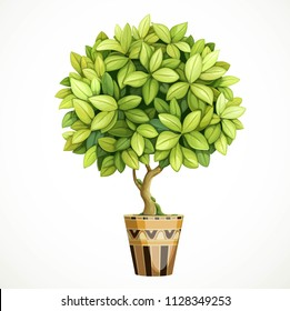 Green decorative little tree in pot isolated on white background