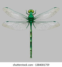 The green Dragonfly on gray background.