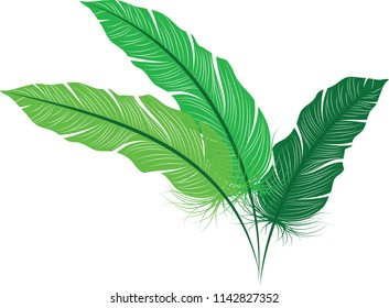 Green feather, Leafy plant, different shades