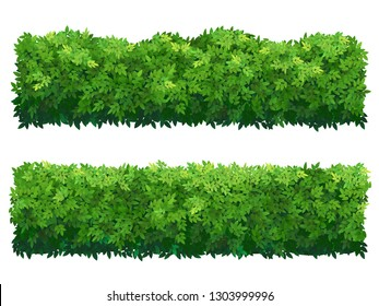Green fence rectangular boxwood shrubs. Set of bushes of different shapes isolated. Ornamental plant for decorate of a park, a garden or a green fence. Foliage for spring and summer card design.