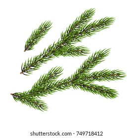 Green fir-tree branches. Natural design elements. Winter background with place for text.