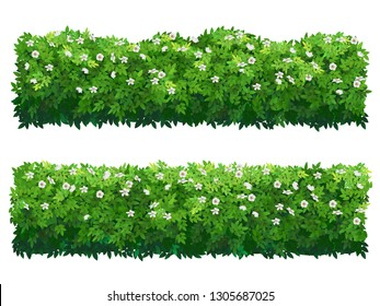 Green flowering fence boxwood shrubs. Set of bushes of different shapes isolated. Ornamental plant for decorate of a park, garden or a green fence. Foliage for spring and summer card design.