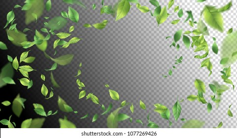 Green flying Leaves. Vector abstract foliage background