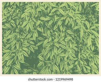 Green foliage texture, leaf nature background. vector illustration