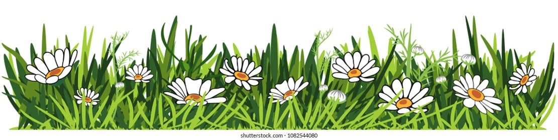 Green fresh herbs and daisies isolated on white background. Border. Vector illustration.