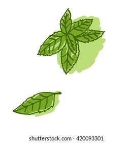 green fresh mint leaves. vector illustration. hand drawing