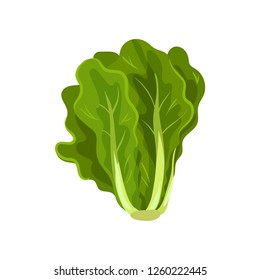 Green fresh salad leaves, healthy organic vegetarian food, vector Illustration on a white background