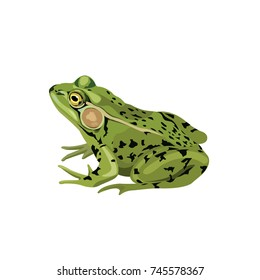 Green Frog drawing vector