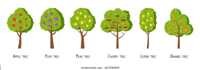 Green fruit tree flat cartoon set. Different trees with ripe fruits apple, plum, pear, cherry, lemon, orange. Simple colorful symbol organic orchard. Natural harvest icon. Isolated vector illustration