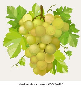 Green grapes with green leaf. EPS10 vector illustration